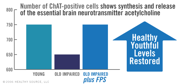 Chart shows number of ChAT-positive cells showing synthesis and release of the essential brain neurotransmitter acetylcholine. Young vs old-impaired study shows healthy youthful levels were restored when taking phosphatidylserine.
